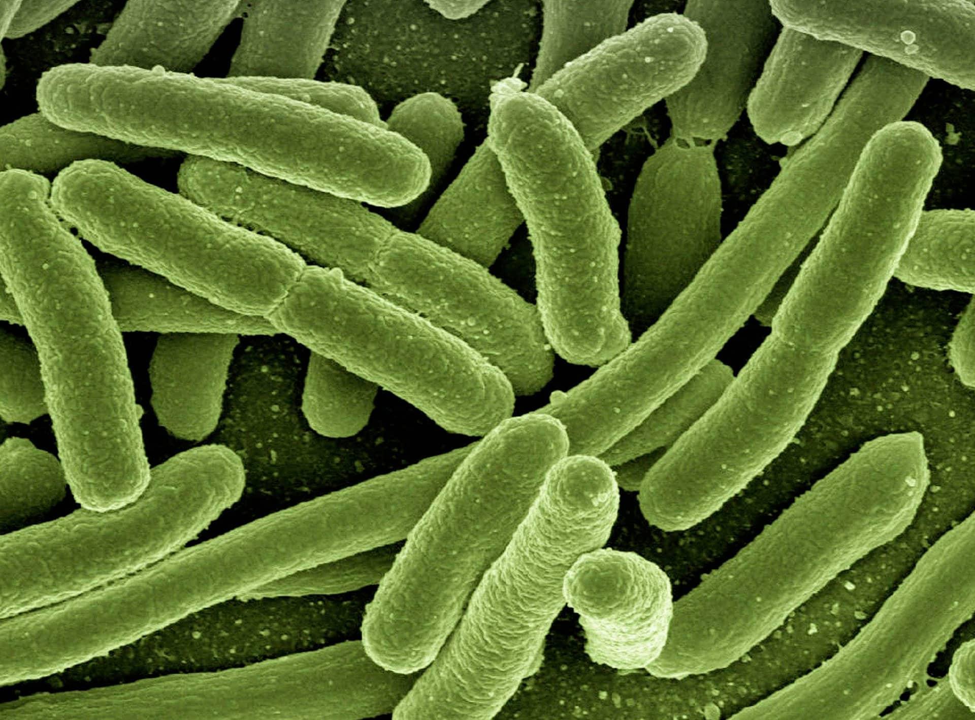 Control Legionella - Asevan